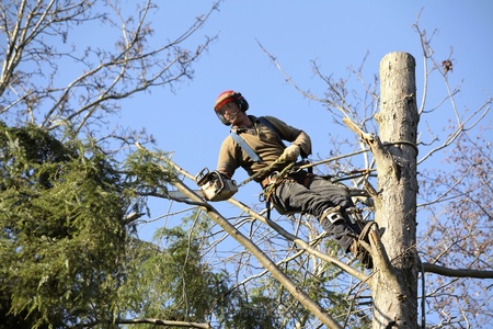 tree service havelock