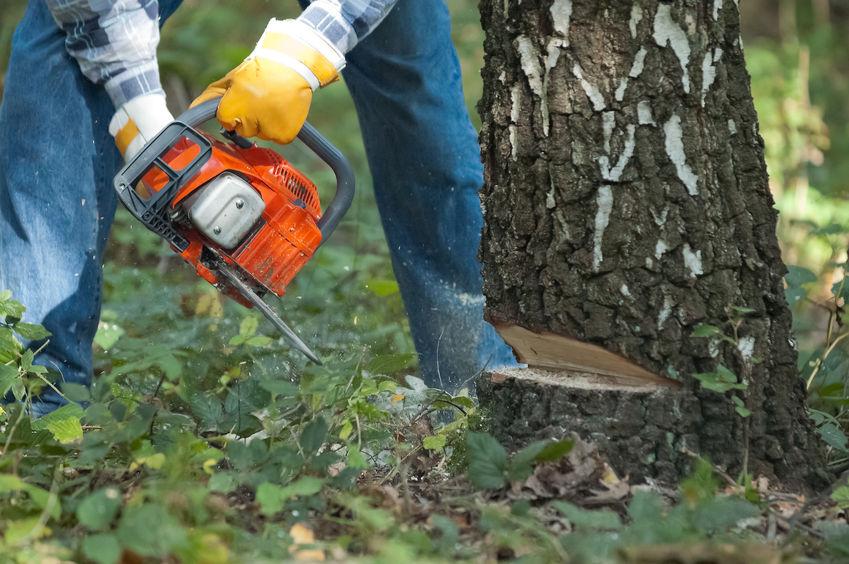 tree service madoc