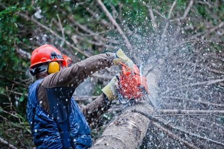 tree service marmora