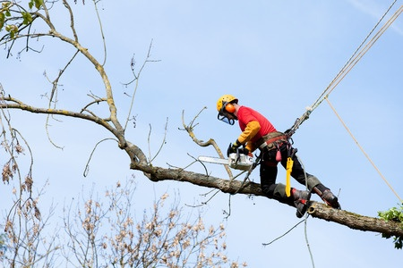 tree service norwood