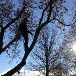 tree-trimming-ontario
