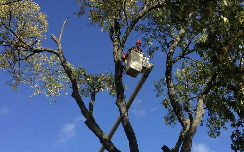 tree service bancroft