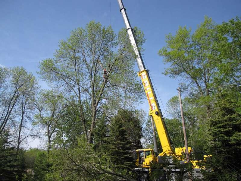 tree service buckhorn
