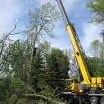 tree service kawartha lakes on