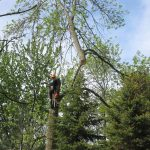apsley on tree service