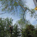 tree service trent hills ON