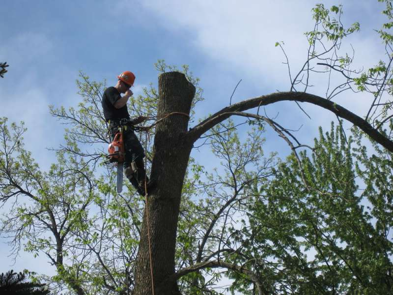tree service northumberland co on