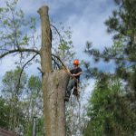 tree removal peterborough