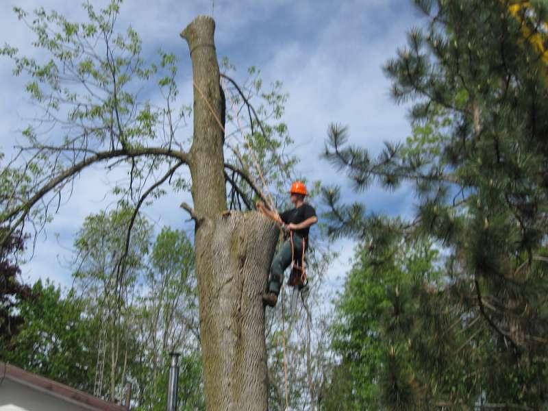 tree removal peterborough
