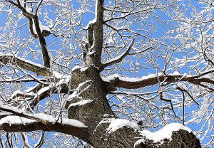Tree covered in light snow.