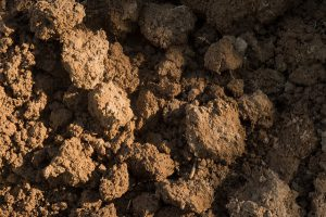 An example of what soil should look like.