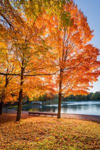 Tree in the autumn.