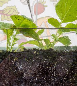 soil with nitrogen
