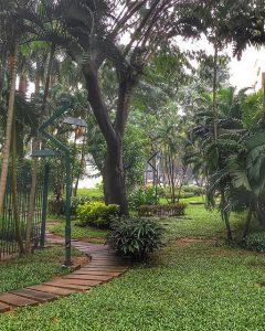 lush yard